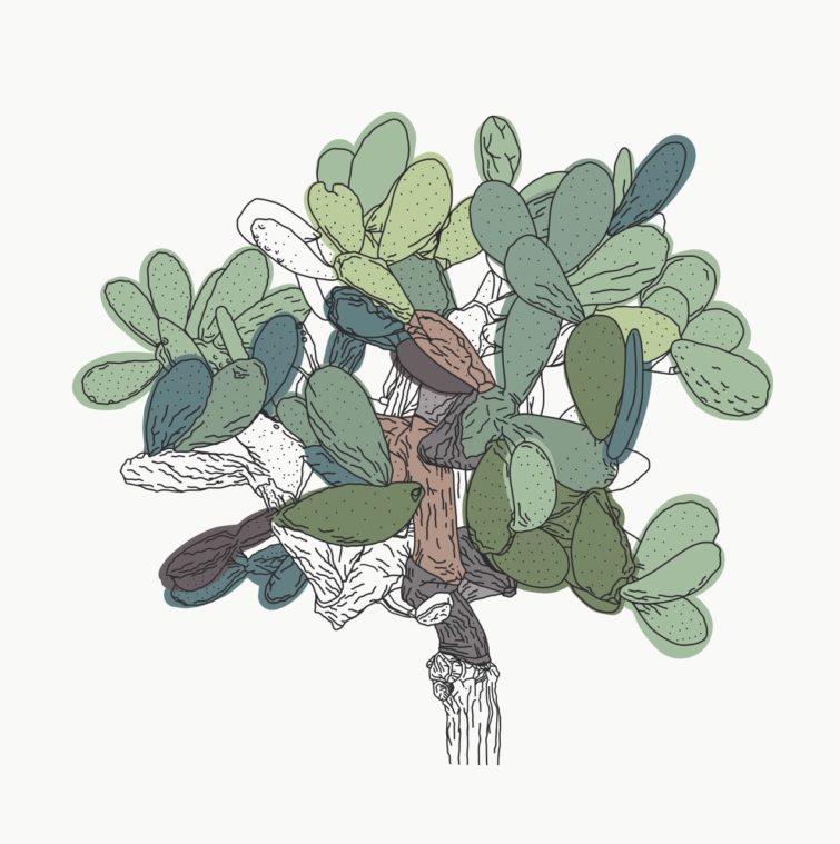 botanicals2