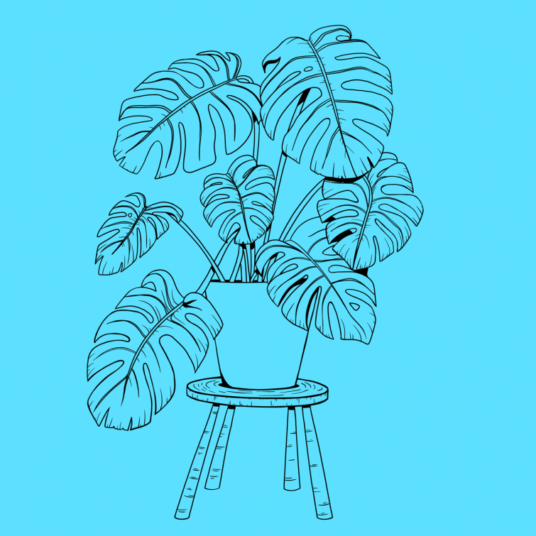 houseplantsq