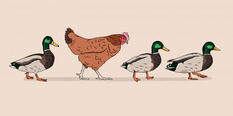 LoniThompson_Ducks