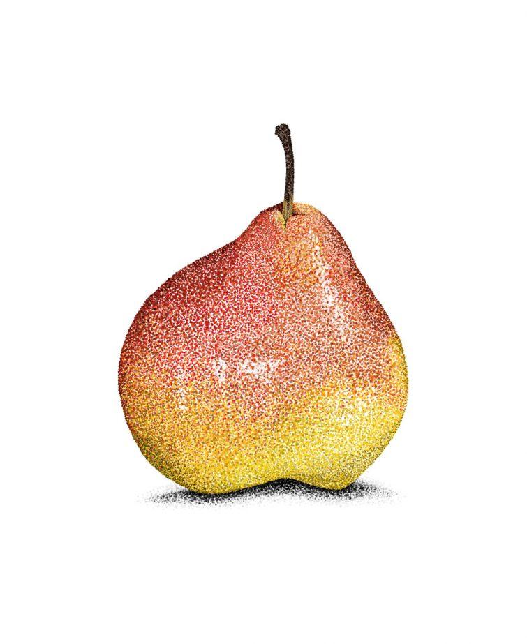 Pear_LR
