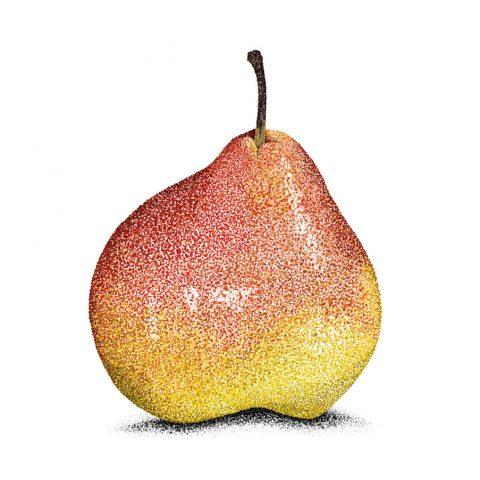 Pear_LR_sq